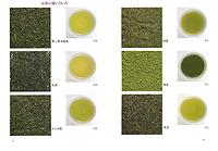 緑茶の事典(見本)