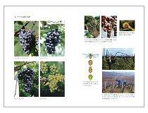 ワインの事典(見本)