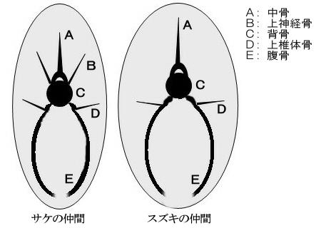 06060_5.jpg