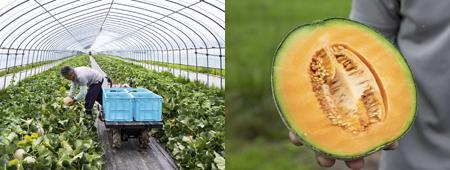 melon02.png
